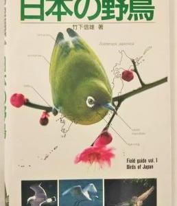 かわいい小鳥さん💛