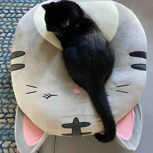 猫とジャンボなスクイッシュマロ(ぬいぐるみクッション)