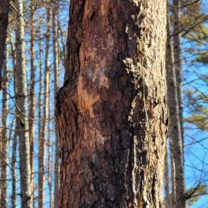 八ヶ岳ライフにおける「木との付き合い方」— 真冬の伐採作業2021 ①前日儀式編