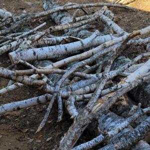 八ヶ岳ライフにおける「木との付き合い方」— 真冬の伐採作業2021 ③木よりも凄い我が社(家)の社主(奥)さま