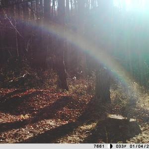 自動録画された不思議な「森の画像」—「森の神様の御用始め」かな?