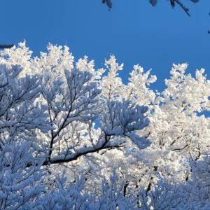 八ヶ岳からの贈り物 —「青と白の時」