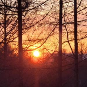 「春の柔らかな夕陽」と「肉厚グリルパン」に魅了された日