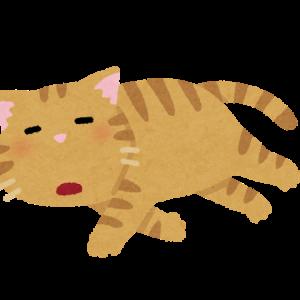 【画像あり】猫じゃまなんだけど