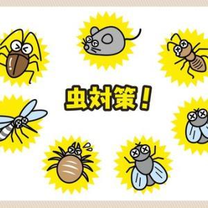 『外構で』庭に虫を発生させない工夫 虫がいると困る理由