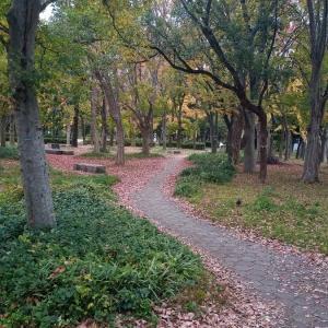 大阪城公園まで紅葉を見に行ってきました