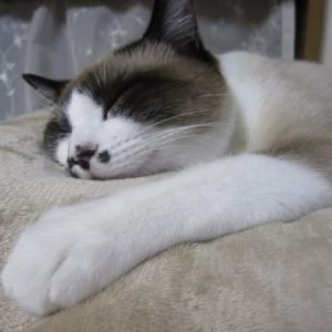ノブさんとタケちゃん 今日の猫ちゃんの様子と最近気になったこと