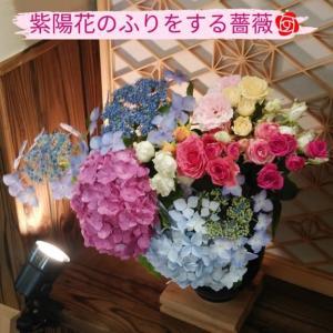 紫陽花のふりをする薔薇🌹
