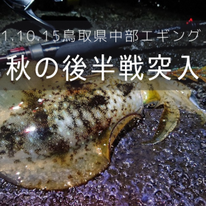 2021.10.15鳥取県中部のエギング釣果速報「絶好のチャンスをモノにした」