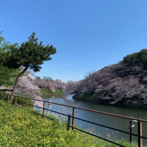 そろそろ桜の季節…