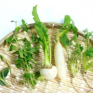 七草の意味と効能、そして我が家の七草ご飯🌱