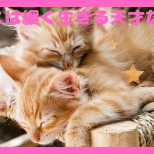 【癒し猫】ねこは緩くいきる天才だwwコロナ禍に癒される画像・動画集⇒