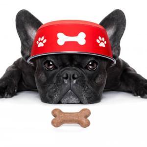 【涙やけ改善】愛犬に食べさせたいドックフードの選び方!