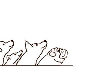 【子犬の餌ふやかすのはいつまで?】3ヶ月までふやかすのが良い理由