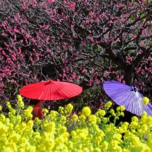 【一品贅沢】照っても降っても満足感のしあわせの下に居る コンビニ傘 100均傘からの卒業