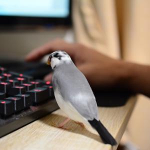 【ロングテールSEO】楽しくブログを続ける方法 自分なりでいいんでないかい