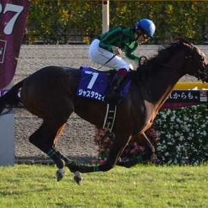 POG2021-2022 須貝厩舎に入厩予定の2歳馬情報