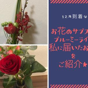 【12月到着分】お花のサブスクサービス、ブルーミーライフ(Bloomee LIFE)で届いたお花を写真付きでご紹介!センスは最高に良い!でもレギュラープランにしてはボリューム不足?初回無料クーポンあり★