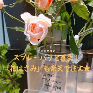 日比谷花壇で愛らしいスプレーバラと再会!花ライフを充実させるアイテム「花はさみ」も楽天で注文★
