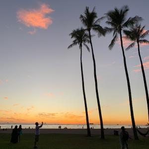 椰子の木とハワイ