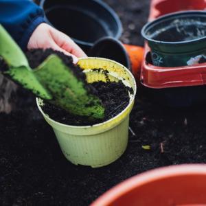 植え替えが必要な理由と鉢の種類の意味