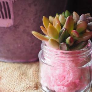 多肉植物の寄せ植えで使うアート水苔って何?メリット・デメリット