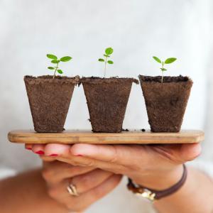 【初めてでも安心】初心者におすすめのハーブ8選とその特徴【鉢植え】