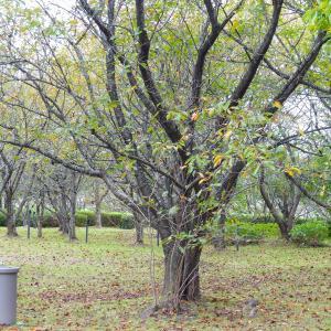 近場で小さな秋を撮って来ました(2)