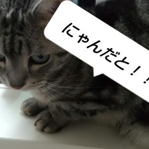 猫を食べた日