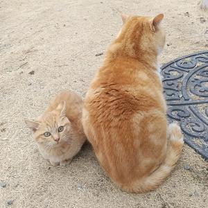 猫と晩酌とわたし~♪(≧∇≦)