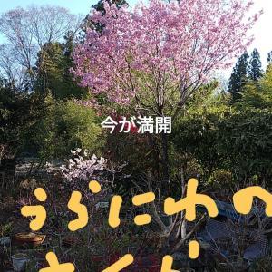 今年の種蒔き(*⌒▽⌒*)・1