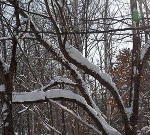 冬の西岡公園
