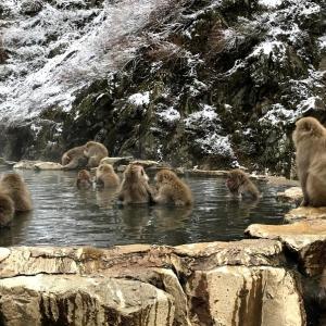 【地熱】は英語で何と?日本の資源量は世界〇位!国立公園との関係は?