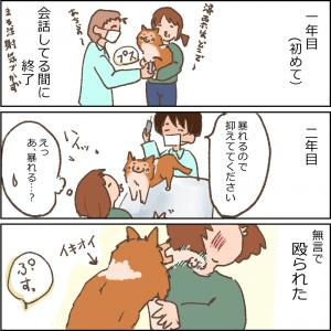 狂犬病予防注射の思い出