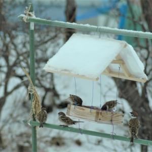 雀のオヤツ