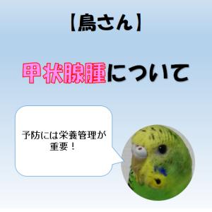 【鳥さん】甲状腺腫について【予防には栄養管理が必要】