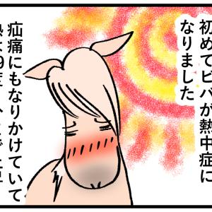 馬が熱中症になった時の対処法