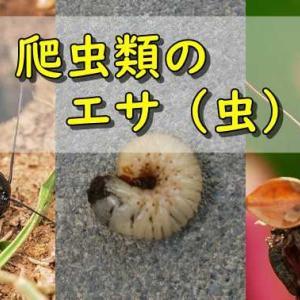 爬虫類のエサになる虫の種類。ショップで販売している虫から、その辺で捕まえられる虫まで