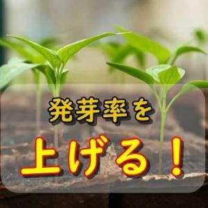 野菜の種を発芽させやすくする・丈夫な苗にする方法