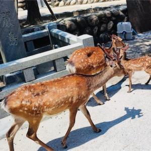 ゆったりと宮島観光してきました!お腹も心も満たされる観光スポット!!(前編)【広島お出かけスポット】