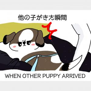 【パピースクール初日 #1】FIRST DAY AT PUPPY SCHOOL (#1)