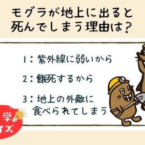 【雑学クイズ】モグラが地上に出ると死んでしまう理由は?