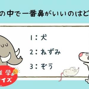 【雑学クイズ】動物の中で一番鼻がいいのはどれ?