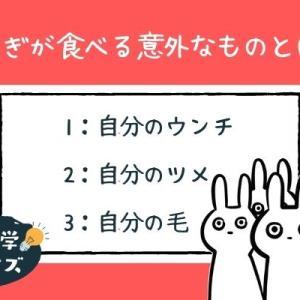 【雑学クイズ】うさぎが食べる意外なものとは?