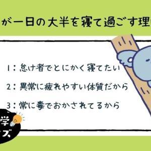 【雑学クイズ・動物】ちょっと間抜けなコアラ