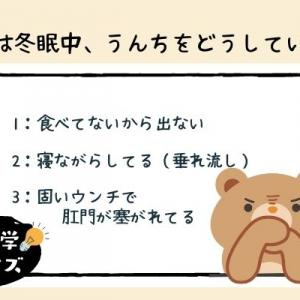 【雑学クイズ・動物】冬眠中のクマのウンチ