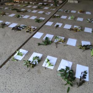 【造園技能士検定】講習会を受けてきました。お庭に関わる仕事のスキルアップ!