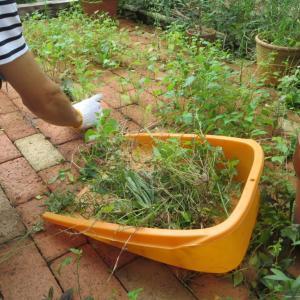 休日に裏庭の草取りを楽しくのーんびりと!