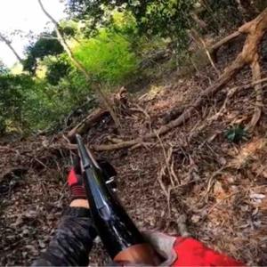 【猟犬】セルフハンティングを矯正する訓練【狩猟】