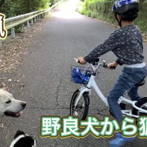野良犬を猟犬として活躍できるように訓練する